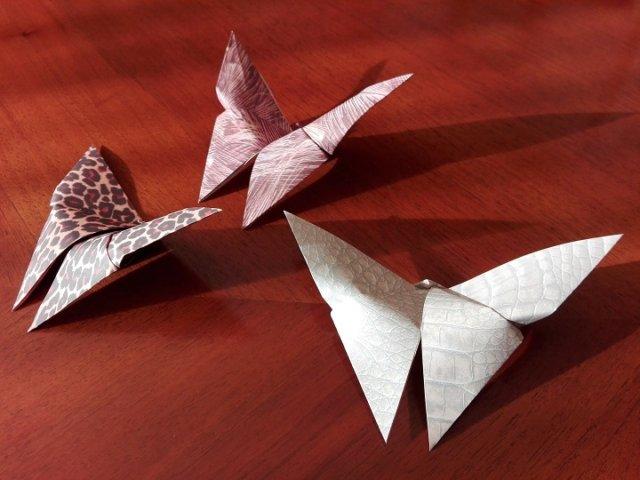 butterfly-1994480_1920
