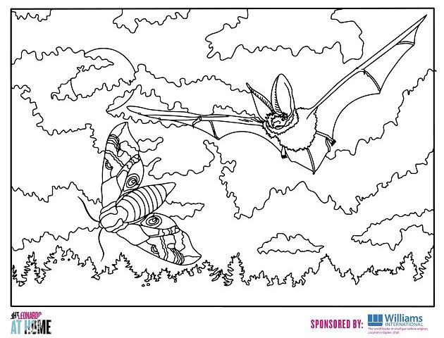 sonic-echolocation-coloringpage